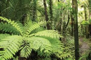 Rainforest Panama, PanamaQmagazine.com